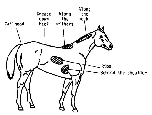 Body Scoring Chart