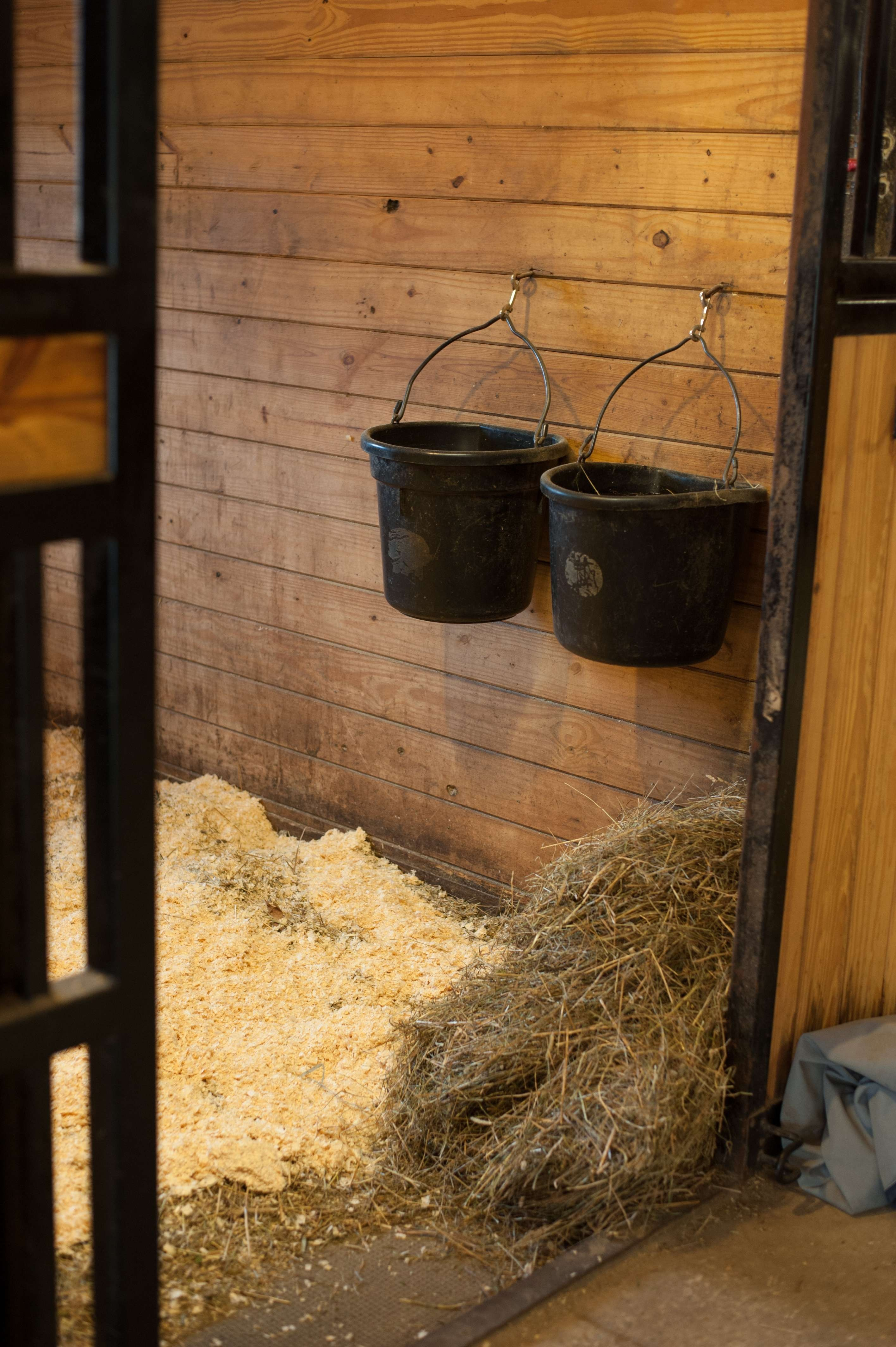 Supplements Complement Horse Feed