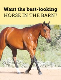 Want the best-looking horse in the barn?