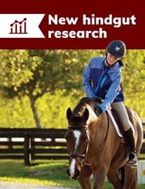 New hindgut research