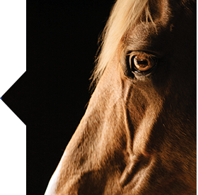 SmartCalm Ultra horse