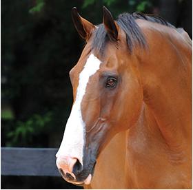 SmartCalm horse