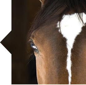 SmartMare Harmony horse