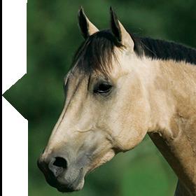 Leg Up Calm Pellets horse