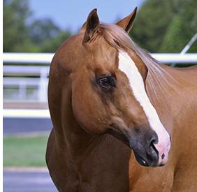 SmartCombo™ horse