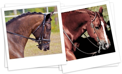 English and Western Horses