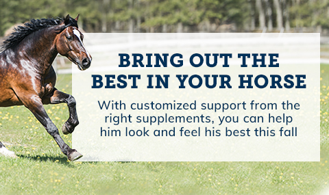 Bring out the best in your horse. Shop supplements.