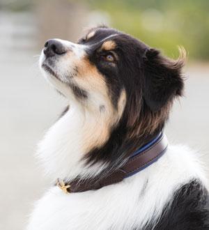 Image of a dog