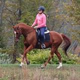 jmg_equestrian