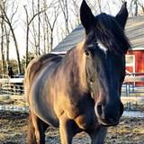 tattooed_equestrian