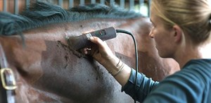 Woman clipping a horse's neck.