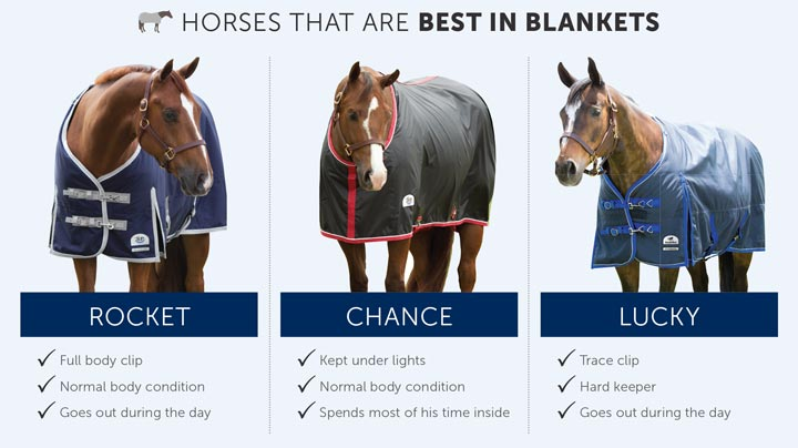 Reasons horses need to wear blankets