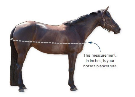 Diagram of how to measure a horse for a blanket