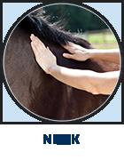 Henneke: neck