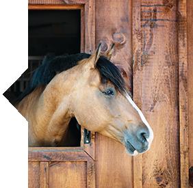 SmartR&R™ horse