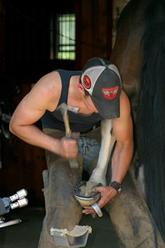 A farrier holding up a horse's hind leg, while hammering a nail in place
