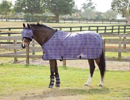 Bay horse in field wearing fly mask, flysheet, and leg wraps.