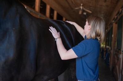 Vet examining a horse's hip as part of a physical exam.
