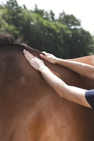 Horse owner examining her horse to help determine the horse's body condition score.