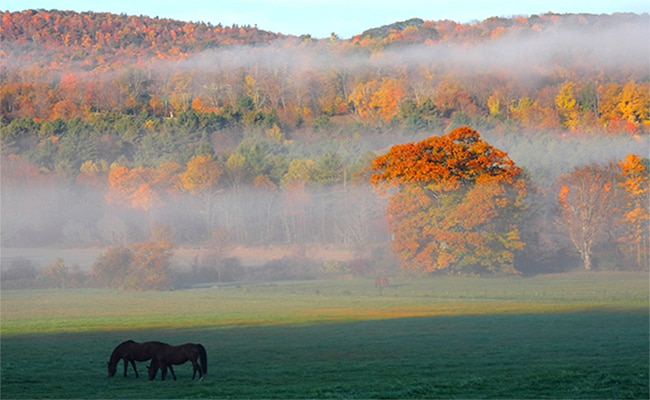 A field with two horses grazing on green grass, with autumn colored leaves on the trees behind them.