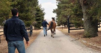 Horse being jogged ahead of Veterinarian.