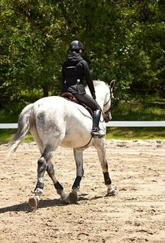 A grey warmblood type horse being ridden in a ring.