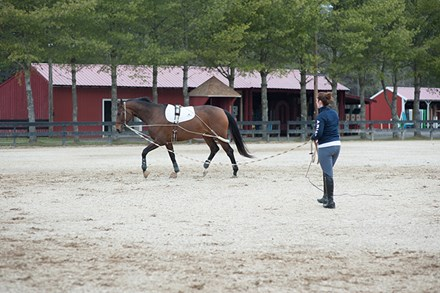 A woman lunging a bay horse in an outdoor ring.