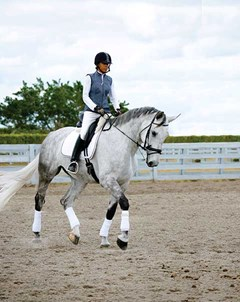 A grey warmblood type horse being ridden in an outdoor ring