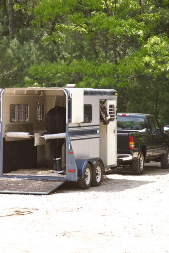 Image of horse in trailer