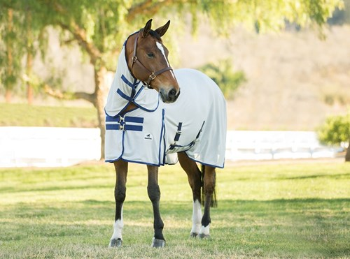 Horse with a fly sheet