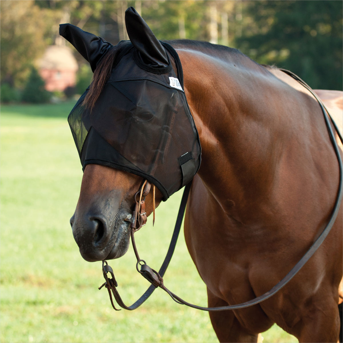 CASHEL FLY MASK STANDARD YEARLING EARS QUIET RIDE RIDING FOR TRAIL Horse