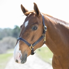 SmartPak Soft Padded Leather Halter - Clearance!