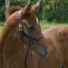 Grow With Me- Foal Halter