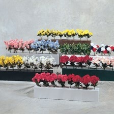 Flower Boxes with Flowers