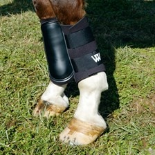 Woof Wear Sport Brushing Boots