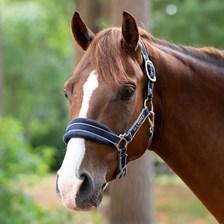 Rambo® Padded Halter - Pony