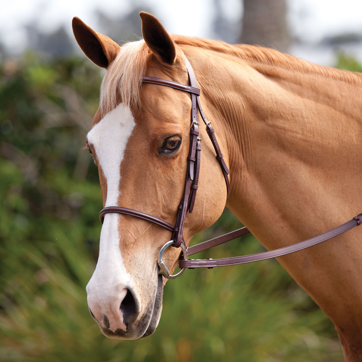 Plymouth Basic Hunter Bridle by SmartPak