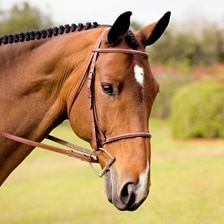 Plymouth® Basic Fancy Stitch Hunter Bridle by SmartPak