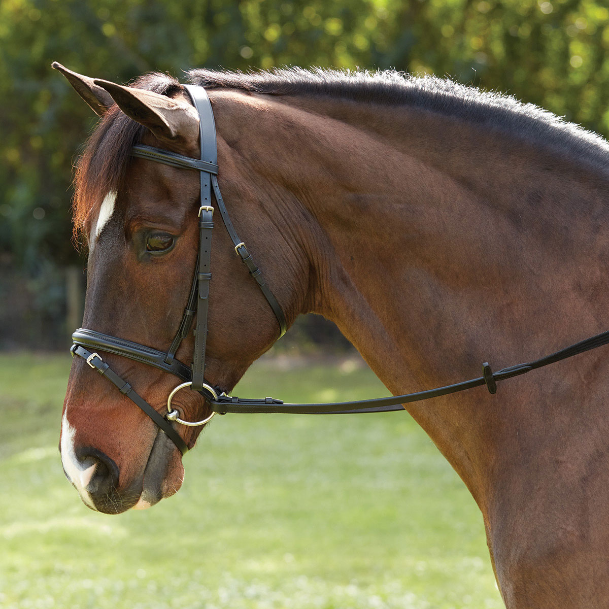 Plymouth® Dressage Bridle by SmartPak