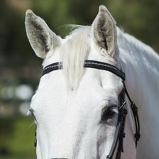 Plymouth® Clincher Browband by SmartPak