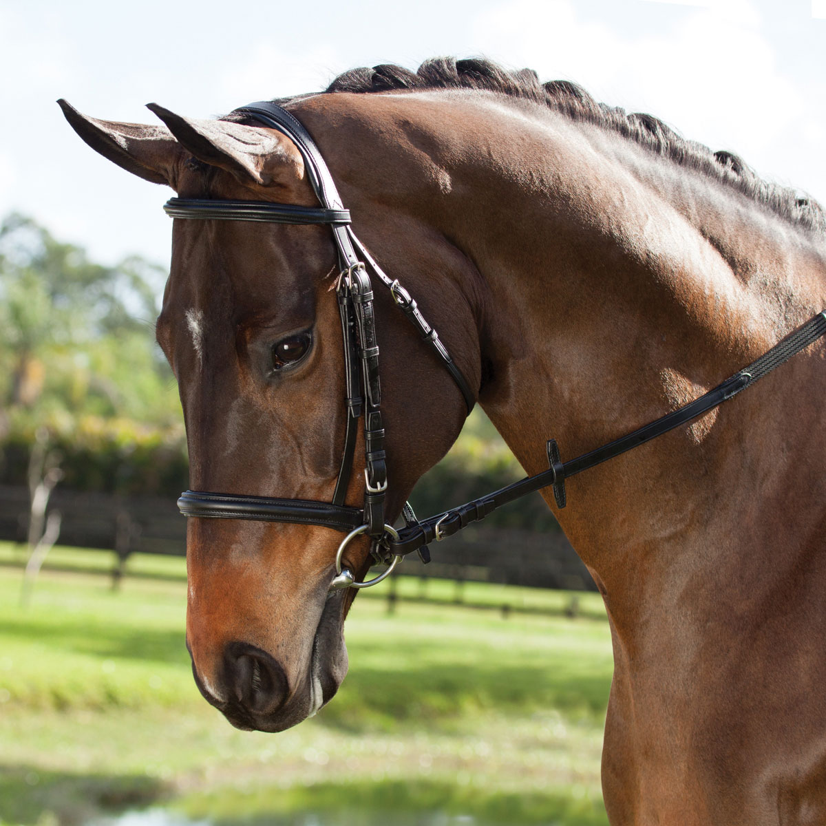 Plymouth Elite Dressage Bridle by SmartPak