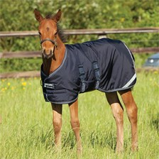 Amigo® Foal Turnout Blanket