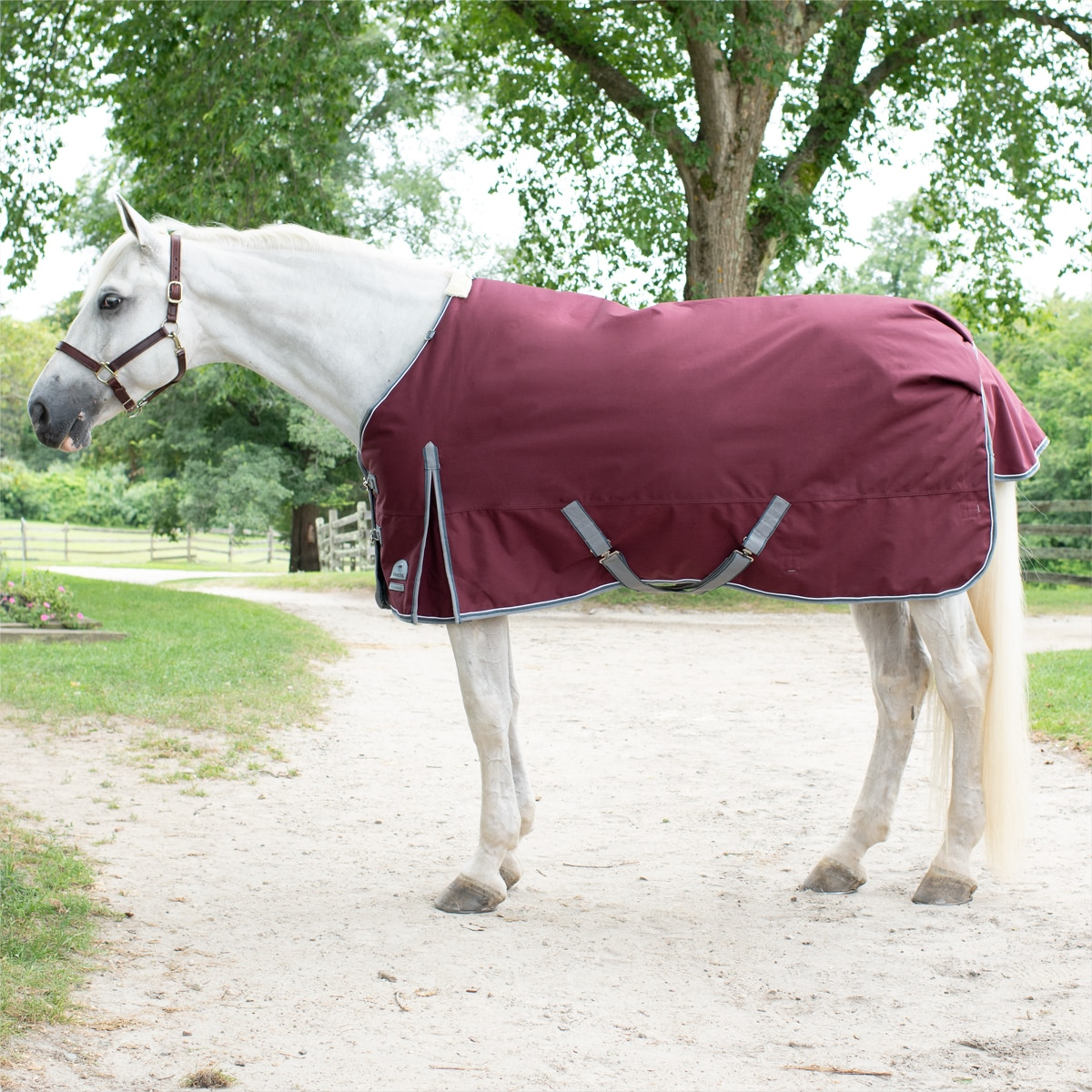 10 Pairs of WHITE//GREY//BEIGE Second Hand Leg Straps for Horse Rugs