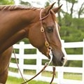 Rockin' SP® Single Ear Headstall - Buckle End