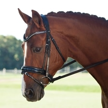 Passier Apollo Snaffle Bridle