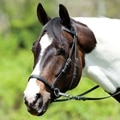 Dr. Cook® Beta Bitless Bridle