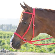 Dr. Cook® Beta Bitless Bridle - Clearance!