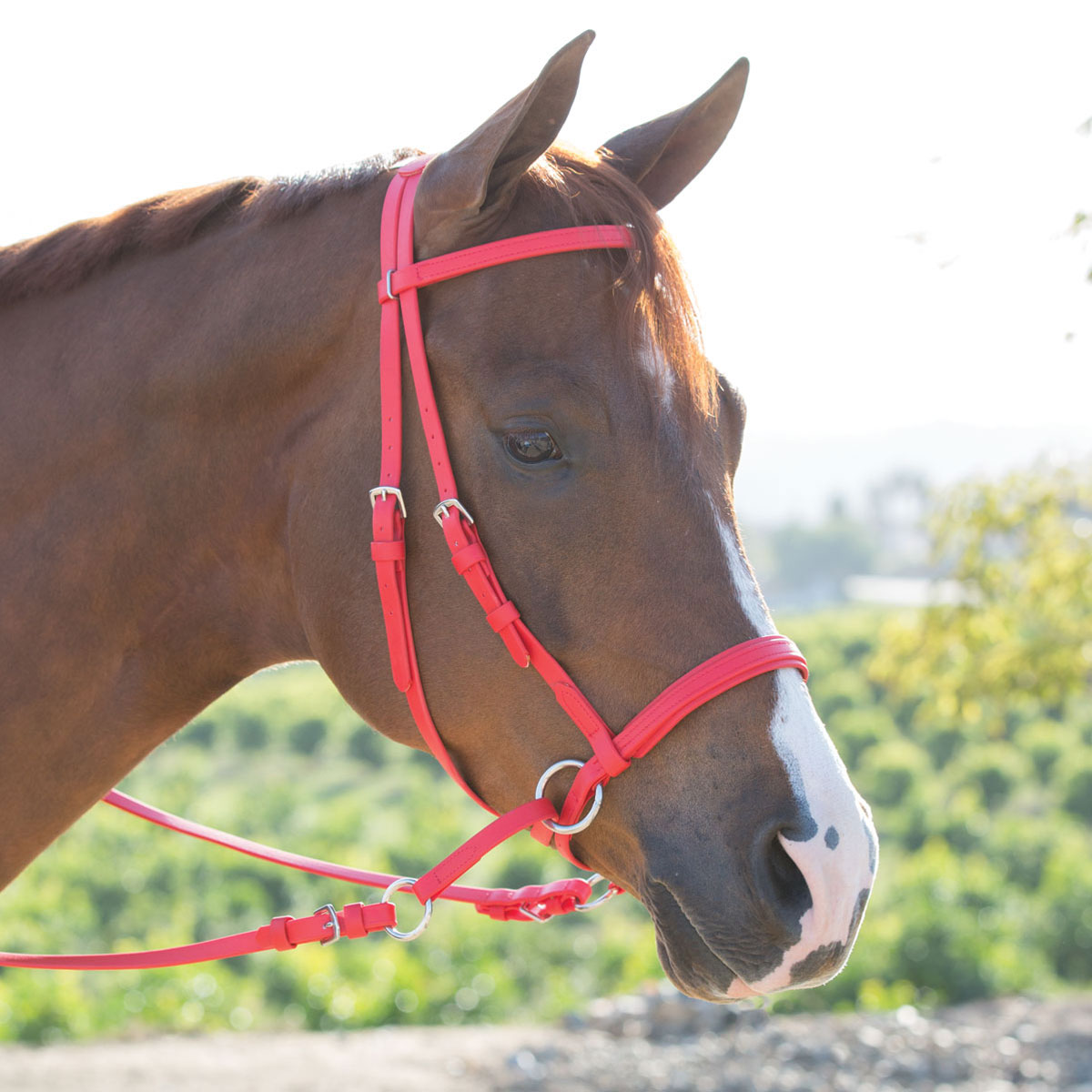 Dr  Cook® Beta Bitless Bridle