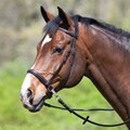 Dr. Cook® Leather Bitless Bridle