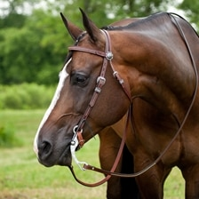 Austin Collection Browband Headstall